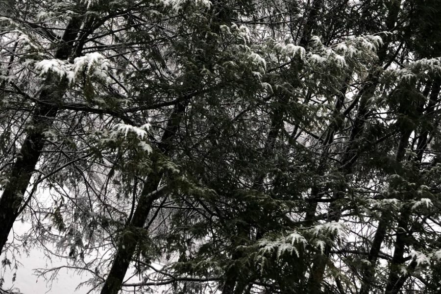 The nor'easter's snow and ice cover nearby pine trees, making branches very heavy. The wind, snow and ice bite people's faces, turning their cheeks apple red.