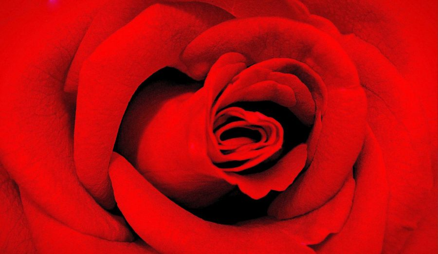 The color red is in full bloom this Valentine's Day. Aside from roses, red also symbolizes the feeling of love during the holiday.