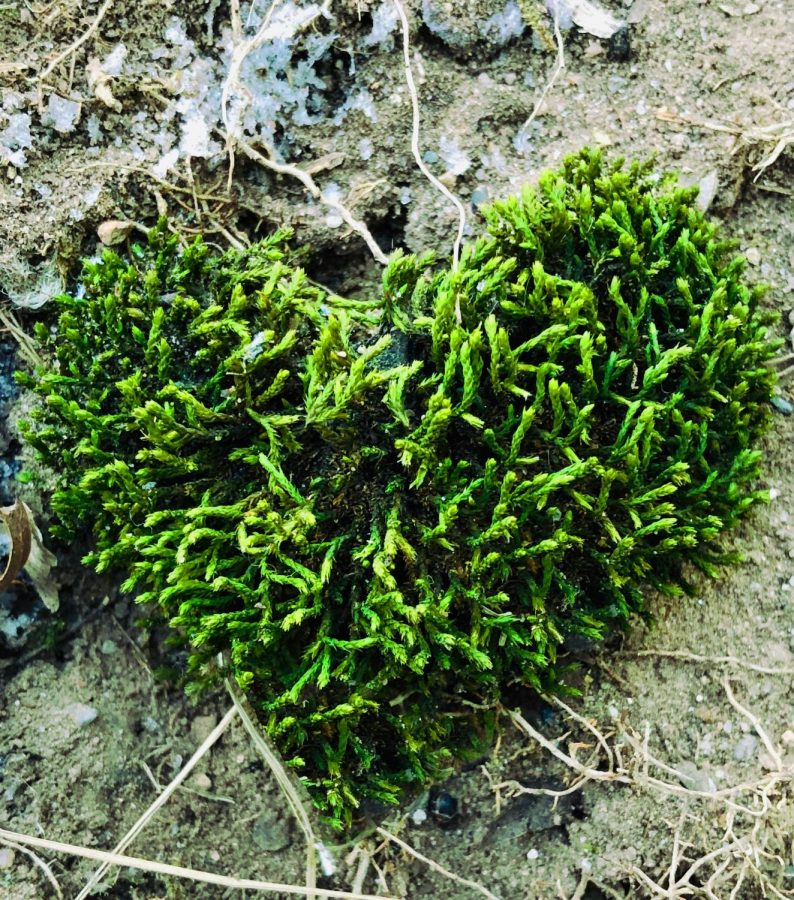 Mother Nature creates her own Valentine's Day greeting