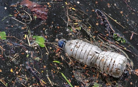 Some online research says ocean animals are the most likely to die from litter.