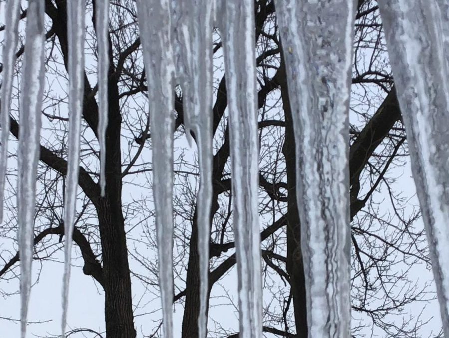 Water dripping from the trees in this backyard formed huge icicles.